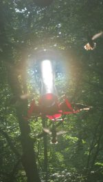 Hummingbirds swarming illuminated feeder in hazy high summer